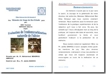 Evaluation de l'endomycorhization naturelle de l'olivier