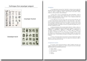 Réalisation d'un caryotype humain et murin