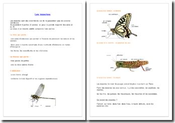Connaissances générales sur le monde des insectes