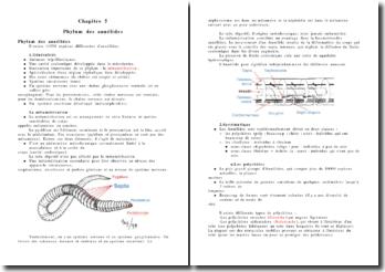 Phylum des annélides