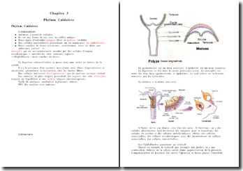 Phylum Cnidaires
