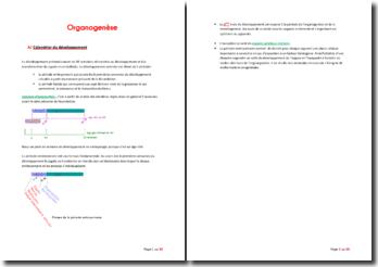 Organogenèse
