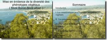 Mise en évidence de la diversité des phénotypes végétaux