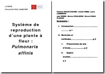 Système de reproduction d'une plante à fleur : Pulmonaria affinis