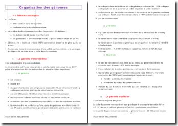 L'organisation des génomes