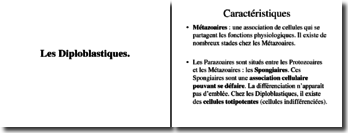 Les diploblastiques: caractéristiques et origines