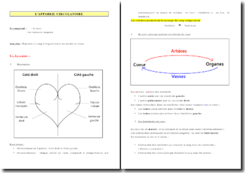 L'appareil circulatoire: le coeur et les vaisseaux sanguins