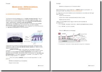 Les membranes et différenciations membranaires