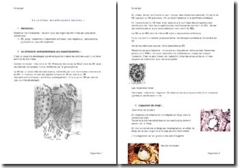 Le système membranaire interne