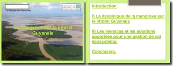 La mangrove sur le littoral Guyanais