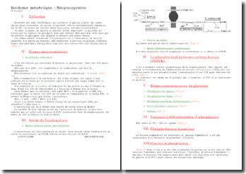 Biochimie métabolique : la néoglucogenèse