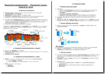Transport membranaire: transport passif, facilité et actif