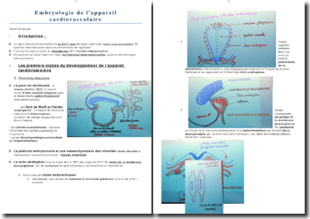 Embryologie de l'appareil cardiovasculaire