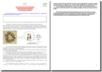 La visualisation des brassages génétiques au cours de la méiose chez le champignon Sordaria