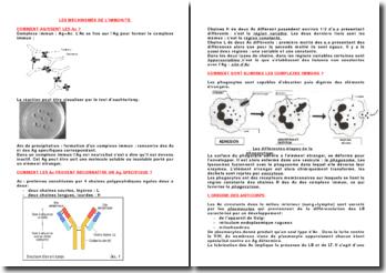 Les mécanismes de l'immunité
