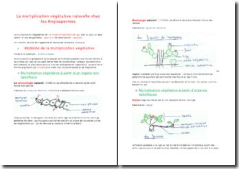 La multiplication végétative naturelle chez les angiospermes