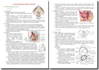 Cours d'anatomie du petit bassin chez la femme PACES