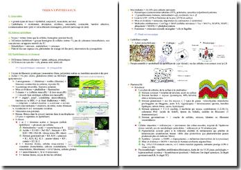Cours d'histologie PACES (première année de médecine)