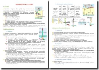 Cours d'adhérence cellulaire PACES (première année de médecine)