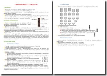 Cours sur les chromosomes et le caryotype PACES (première année de médecine)