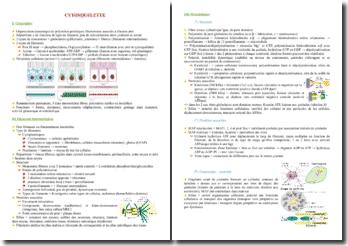 Cours sur le cytosquelette PACES (première année de médecine)