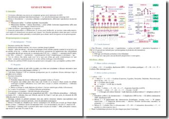 Cours sur les gènes et la méiose PACES (première année de médecine)