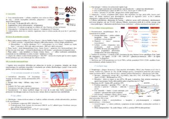 Cours sur le tissu sanguin PACES (première année de médecine)