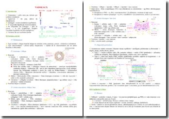 Cours d'histologie des vaisseaux PACES (première année de médecine)