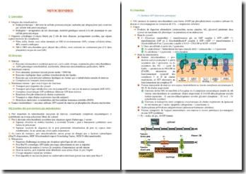 Cours sur les mitochondries PACES (première année de médecine)