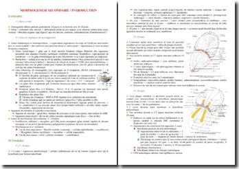 La morphogenèse secondaire chez l'embryon