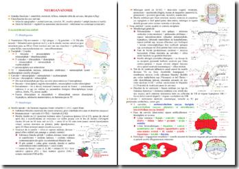 Cours sur la neuro-anatomie PACES (première année de médecine)
