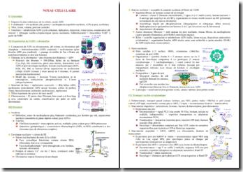 Le noyau cellulaire