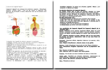 L'anatomie de l'appareil digestif