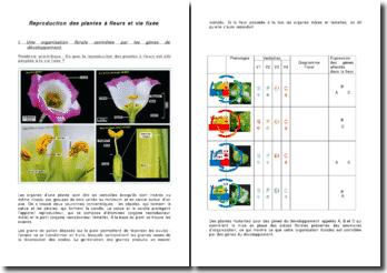 La reproduction des plantes à fleurs et vie fixée