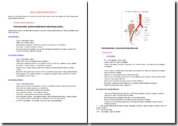 La vascularisation artérielle : la branche artérielle iliaque interne