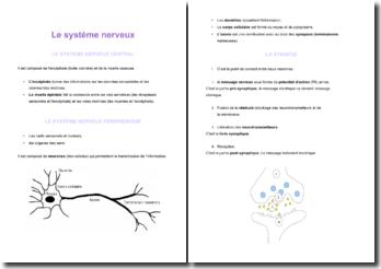 Le système nerveux : central et périphérique