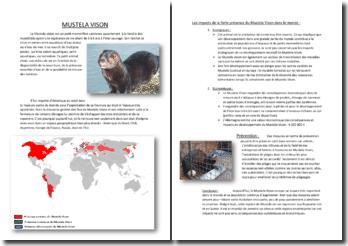 Les impacts de la forte présence du Mustela Vison dans le monde