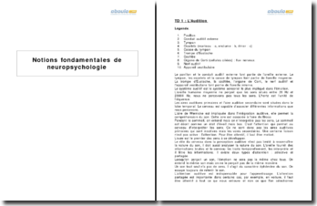 Notions fondamentales de neuropsychologie