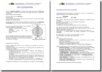 Les lysosomes (P1)