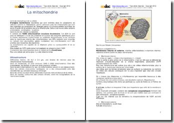 La mitochondrie (P1)
