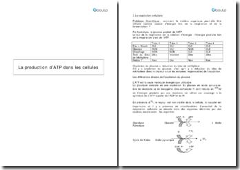 La production d'ATP dans les cellules : comment la matière organique peut-elle être utilisée comme source d'énergie lors de la respiration et de la fermentation ?