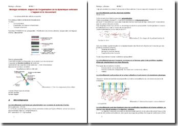 Biologie cellulaire: Aspect de l'organisation de la dynamique cellulaire : L'espace et le mouvement