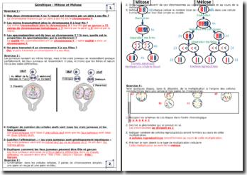 Questions et réponses en génétique - Mitose et méiose