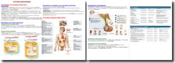 Les caractéristiques du système endocrinien