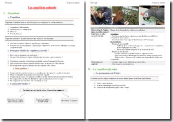 Ethologie : étude de la cognition animale