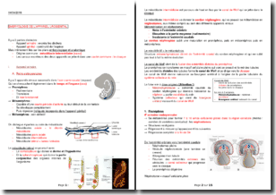 Embryologie de l'appareil urogénital
