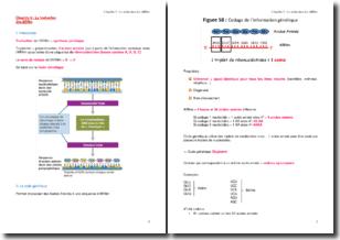 La traduction des ARNm : la synthèse protéique