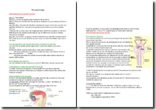 La neurophysiologie