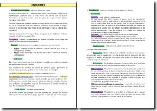 Les grandes caractéristiques des cnidaires