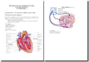 Généralités sur le système cardio-vascumaire